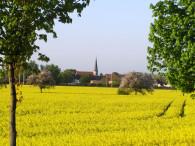 Rapsfeld in Peissen |